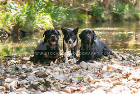 three big dogs down by the river