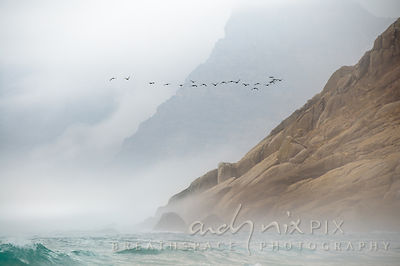 Flock of black cormorants flying next to a mountain above a choppy aquamarine sea, granite cliffs fading into the mist.