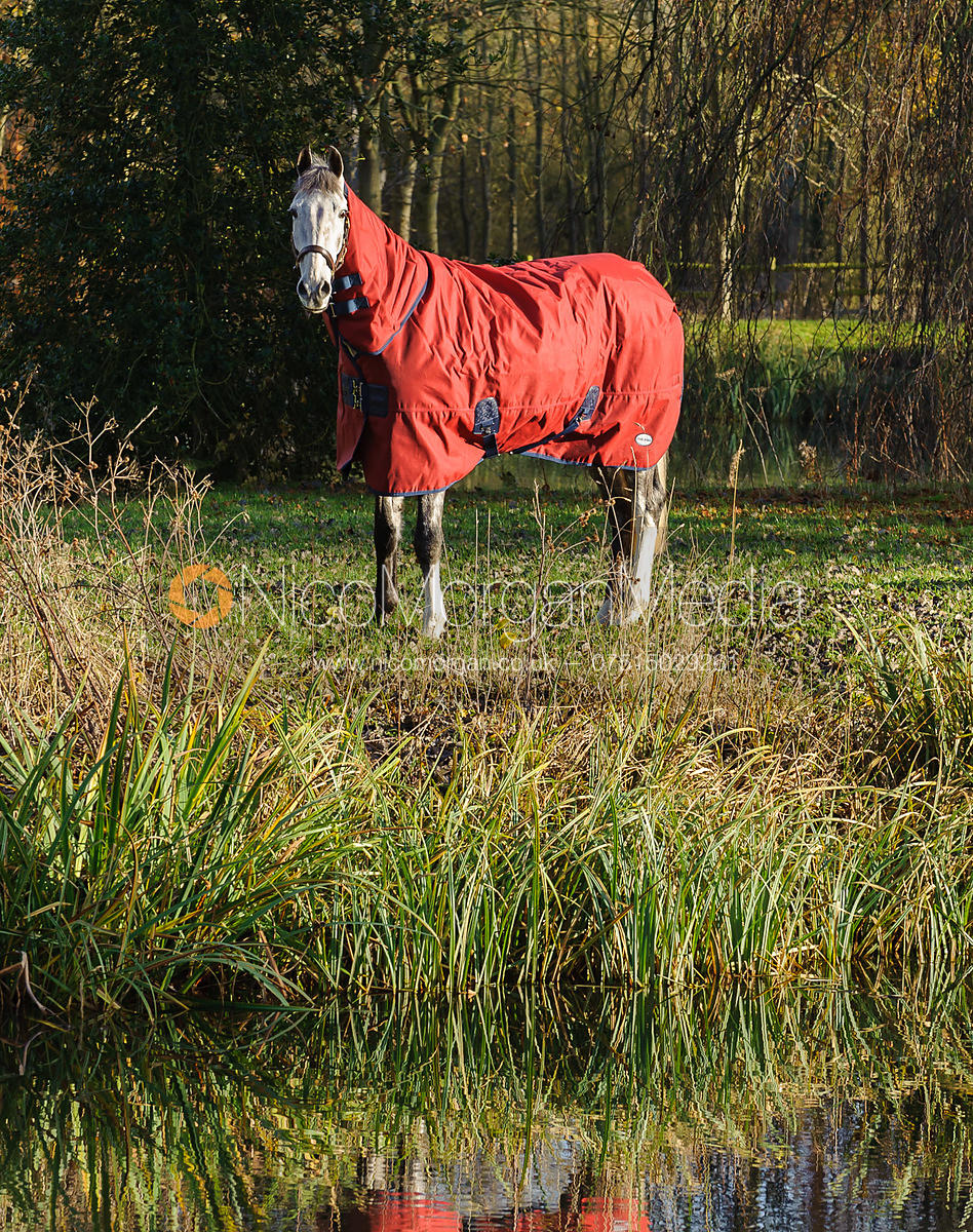 Grey horse in red rug standing by  lake with reflection