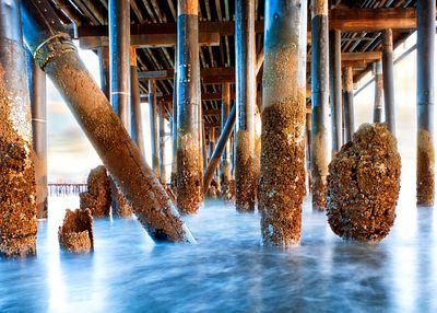 Under Stearn's Wharf in Santa Barbara California