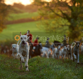 Cottesmore Hounds - The Cottesmore Hunt at America Crossroads 17/10