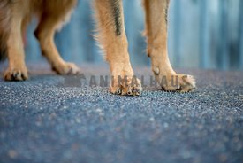 close up of dog feet in front of rustic barn on pavement