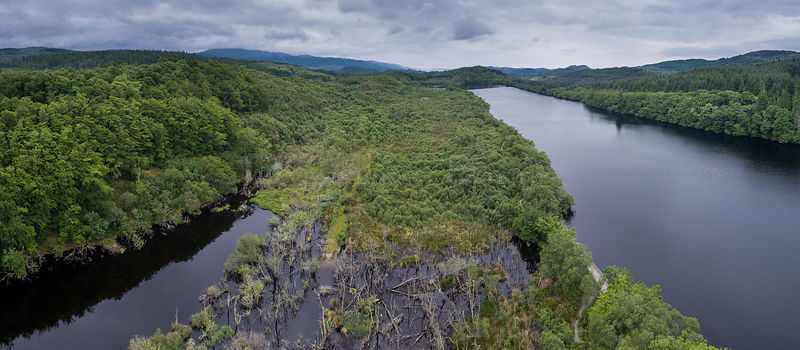 Aerial view overlooking wetland habitat created by European beavers (Castor fiber) between Loch Coille-Bharr and Dubh Loch, K...