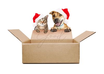 happy Cat and Dog Over Over Empty Box With Santa Hats