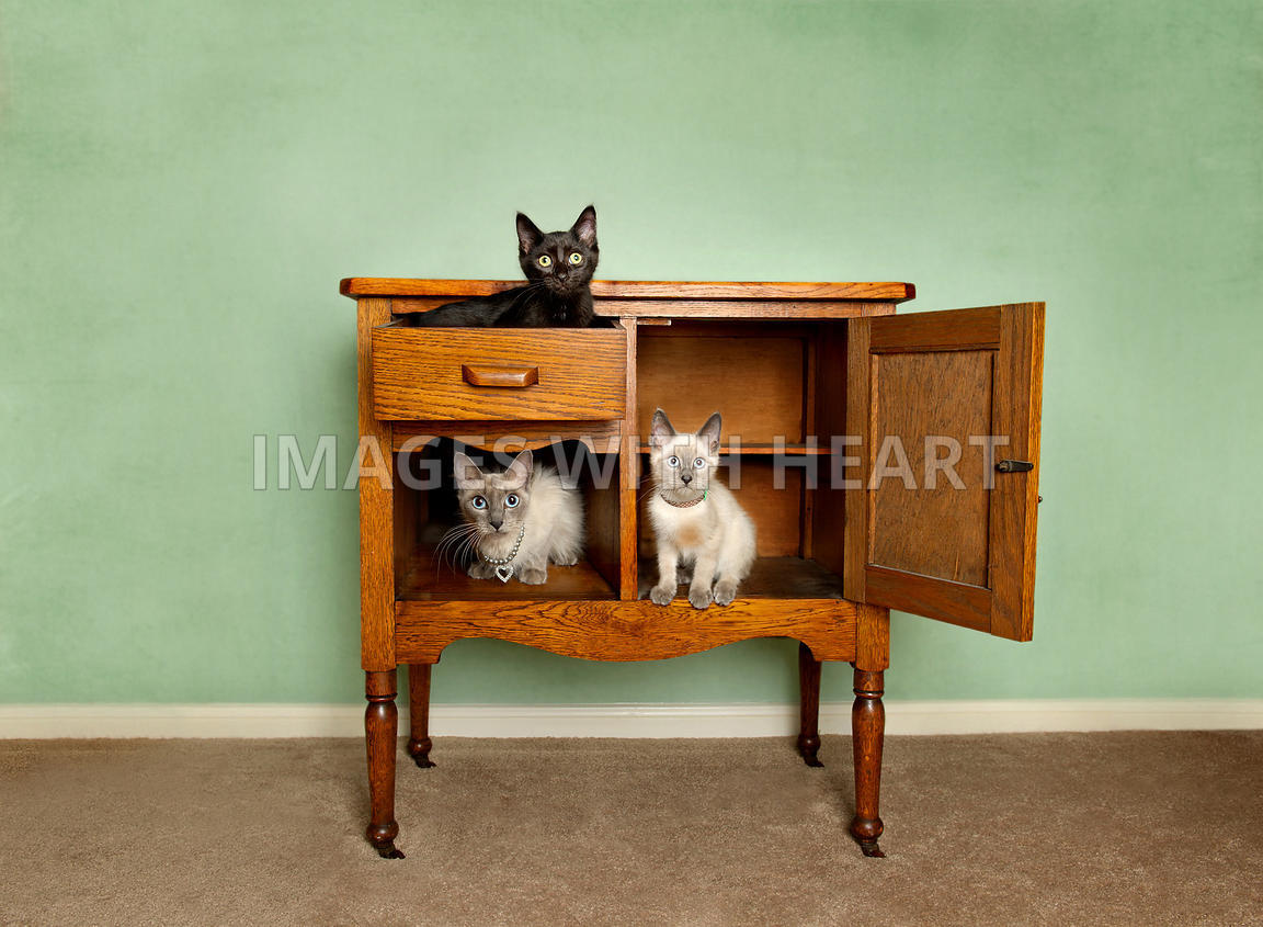 Composite of Cat family in oak washstand