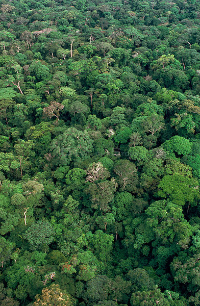 Aerial view of rainforest canopy Rainy season. Congo / Zaire Epulu Ituri rainforest reserve.