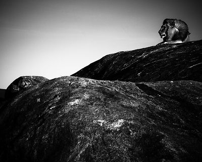 5175-Lion_on_his_rock_Tanzania_2007_Laurent_Baheux