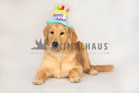 golden retriever wearing birthday hat