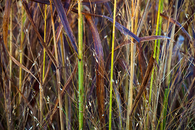 Autumn Macro Grass Abstract 1