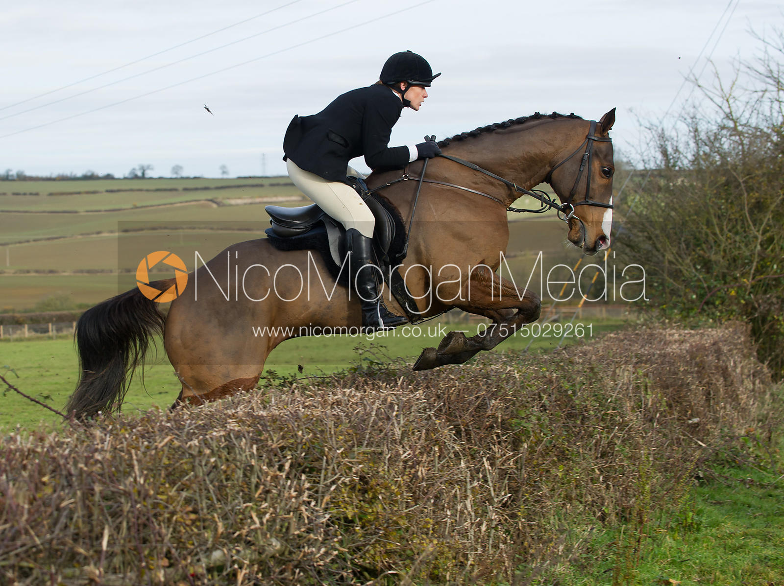 Horse and rider jumping a hedge