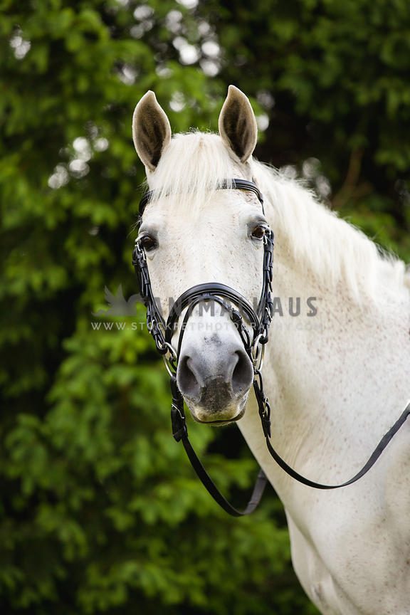 white horse head shot