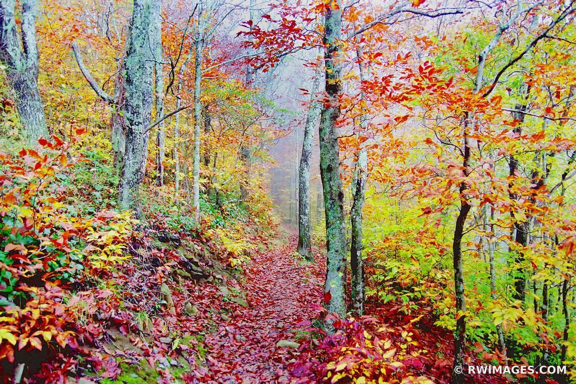 APPALACHIAN TRAIL SMOKY MOUNTAINS FALL COLORS FOREST