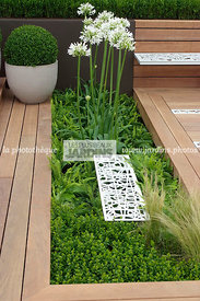 Agapanthus, Ball shaped, Buxus, Contemporary garden, Perennial, Perennial rhizome, Sphere shaped, Topiary, White, Common Box,...