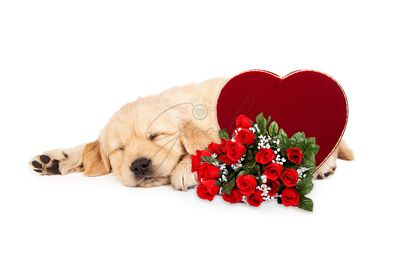 Sleeping Puppy Valentines Heart and Roses