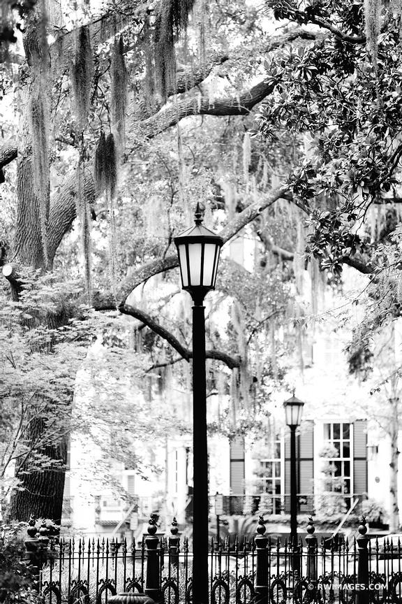 MONTEREY SQUARE HISTORIC SAVANNAH GEORGIA BLACK AND WHITE VERTICAL