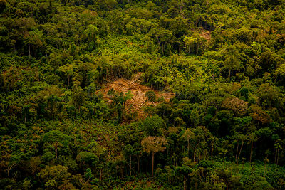 Rainforest aerial showing secondary forest, land cleared for small-scale agriculture in the traditional sustainable 'chacra' ...