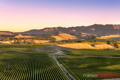 Valley with vineyards, Blenheim, Marlborough, New Zealand