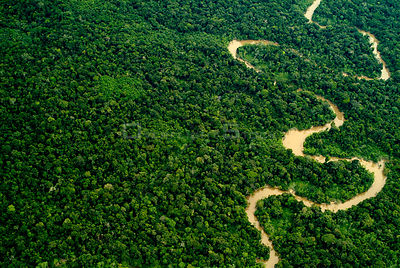 Aerial view of Amazon rainforest with river, Peru