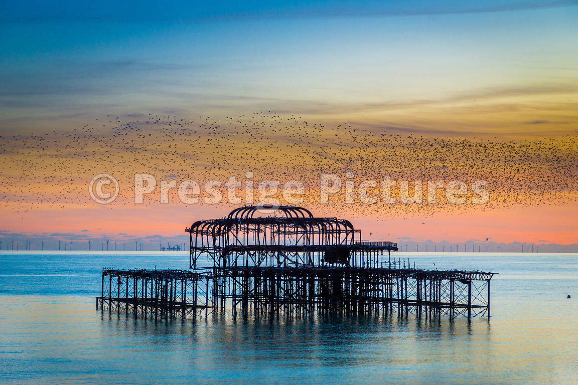 Murmuration of Starlings over Brighton's Burned out West Pier as the sun sets