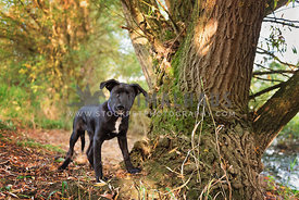 black puppy standing at foot of tree