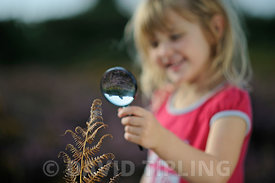 Young girl looking at spider in web on heathland in summer Suffolk Sandlings