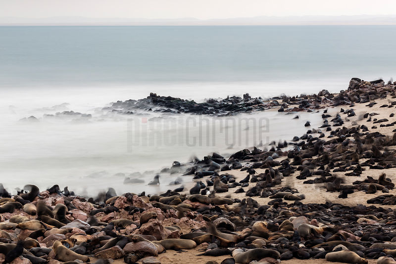 Cape Fur Seals on Beach at Cape Cross