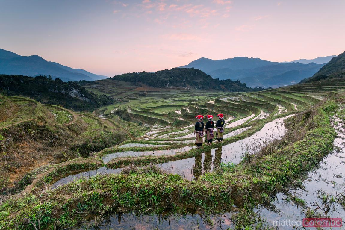 Vietnam, Sapa. Red Dao women on rice paddies at sunrise