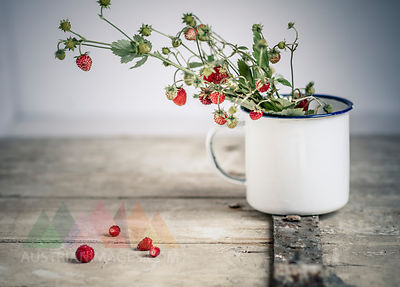 Germany, Baden Wuerttemberg, Bouquet of wild strawberries in enamel cup on old wooden door