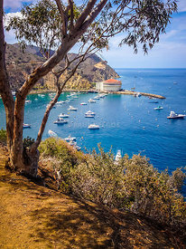 Avalon Bay Catalina Island Picture