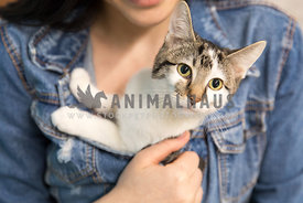 A girl snuggling a kitten inside her denim jacket