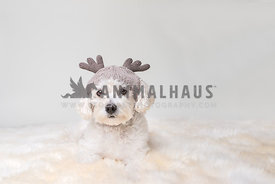 Small fluffy dog weraing reindeer hat lying on fur rug against white background