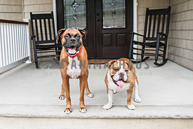 boxer and bulldog on front porch with rocking chairs