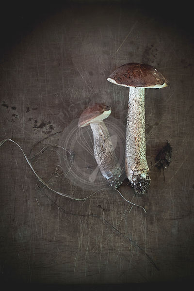 Edible forest mushrooms