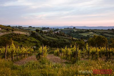 Vineyards and valley at sunrise, San Gimignano, Tuscany, Italy