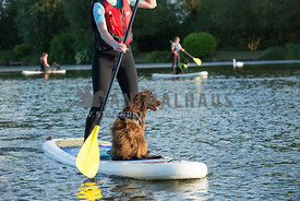 Brown Spaniel on paddle board on lake watersports