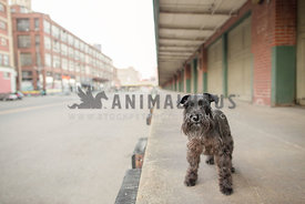 dog standing on warehouse dock in the city