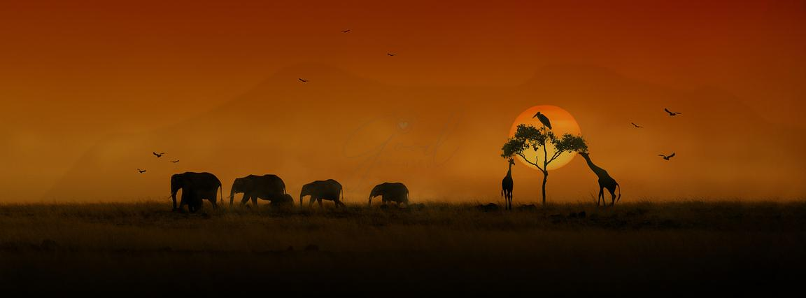 African Animals Sunset Silhouette Banner
