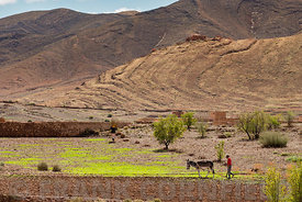 Farmer in rural Morocco