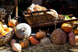 Wheelbarrow with pumpkins in Campo de Fiori