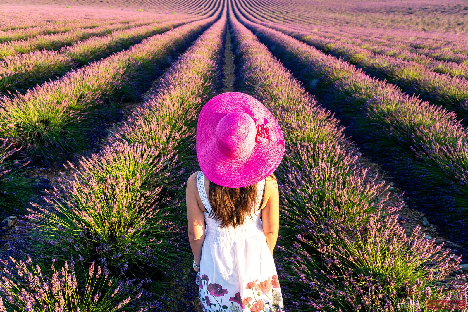 Woman with pink hat in lavender field, Provence, France