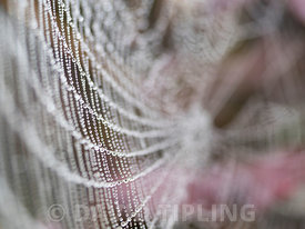 Dew on Garden Spider's web in garden in autumn Kent