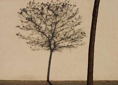 Limited edition Giclée fine art print of a leafless tree and its shadow on a wall.