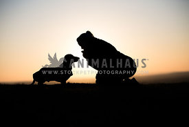 Dog and Owner Silhouette at Sunset