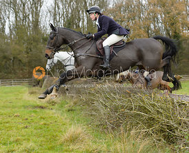 Meghan Healy jumping a hedge by Orton Park - The Cottesmore Hunt at Manor Farm
