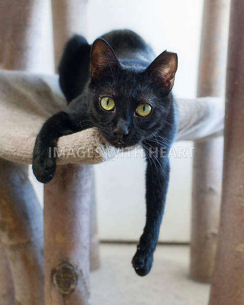 Playful kitty hanging out of cat furniture