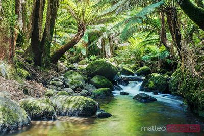 River and lush rainforest, Tasmania, Australia