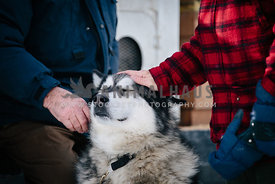 two elderly senior men pat malamute sled dog on the head