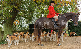 Huntsman and hounds - The Belvoir Hunt at Scalford Hall 16-11-13