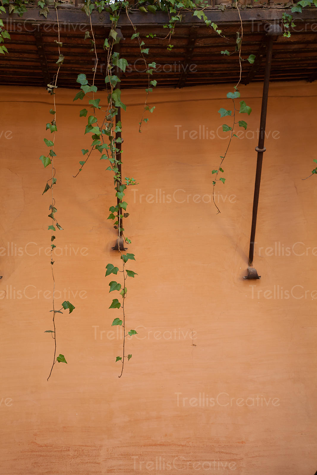 Ivy on wall of Alhambra palace
