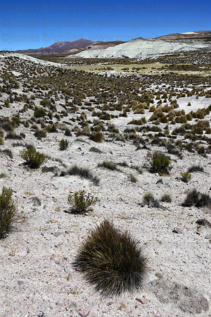 Desert scenery in River Lauca valley, Las Vicuñas National Reserve , Region XV , Chile